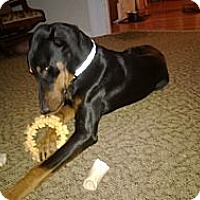 Adopt A Pet :: Buddy - Allegan, MI