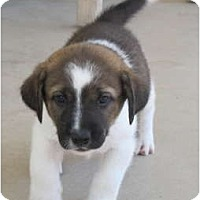 Adopt A Pet :: Sonny ADOPTION PENDING - Phoenix, AZ