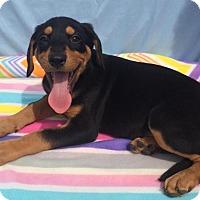 Adopt A Pet :: Flynn - East Sparta, OH