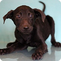 Adopt A Pet :: Binky - Waldorf, MD