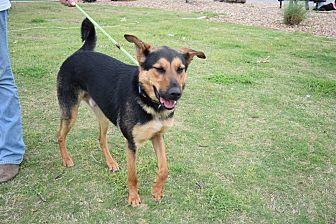 German Shepherd Dog Mix Dog for adoption in White Settlement, Texas - Diego