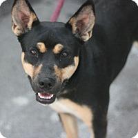 Adopt A Pet :: Glory - Canoga Park, CA