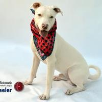 Mixed Breed (Medium) Mix Dog for adoption in Port Charlotte, Florida - Wheeler