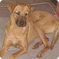 Adopt A Pet :: Missie - Sarasota, FL