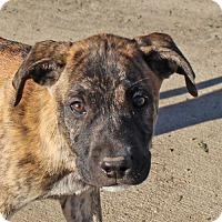 Adopt A Pet :: Kyra-Adoption Pending - Marion, AR