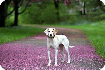 Hound (Unknown Type) Mix Dog for adoption in Drumbo, Ontario - Sammy