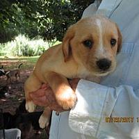 Adopt A Pet :: McGEE - Williston Park, NY