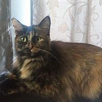 Adopt A Pet :: Anne - Columbus, OH