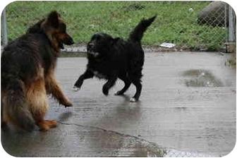 Border Collie Mix Dog for adoption in Bristol, Rhode Island - Chevy