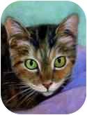 American Shorthair Cat for adoption in Cincinnati, Ohio - sweet_CLEMENTINE