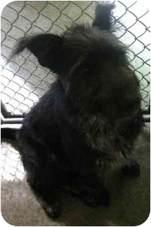 Terrier (Unknown Type, Medium) Mix Dog for adoption in Spruce Pine, North Carolina - Toby