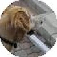 Adopt A Pet :: Pal - Denver, CO