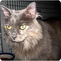 Adopt A Pet :: Frangelica - Deerfield Beach, FL