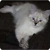 Adopt A Pet :: Scarlett - Oxford, CT