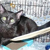 Adopt A Pet :: Matrix - Colmar, PA