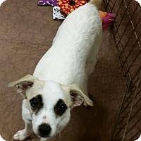 Adopt A Pet :: Stacy - Phoenix, AZ