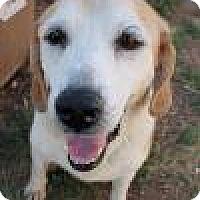 Adopt A Pet :: Eden - Norman, OK