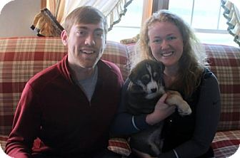 Bernese Mountain Dog/Husky Mix Puppy for adoption in Northville, Michigan - T15 Troy-ADOPTED