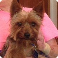Adopt A Pet :: Minnow - Omaha, NE