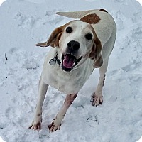 Adopt A Pet :: Miley - Virginia Beach, VA