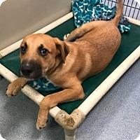 Adopt A Pet :: Flop Vtg - Joplin, MO