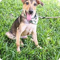 Adopt A Pet :: Jacob - San Mateo, CA