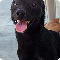 Adopt A Pet :: Pepper - Grants Pass, OR