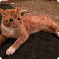 Adopt A Pet :: Nipsey Russell - DuQuoin, IL