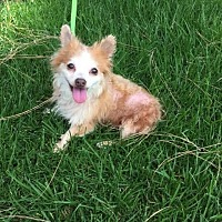 Adopt A Pet :: Jordan - El Cajon, CA