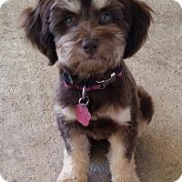 Adopt A Pet :: Mimi Turner - Urbana, OH