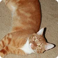 Adopt A Pet :: Morris - Attalla, AL