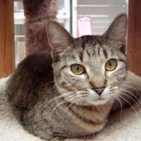 Adopt A Pet :: Jessica - Hayward, WI