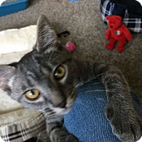 Adopt A Pet :: Tilly - South Bend, IN