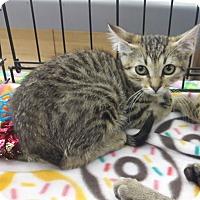 Adopt A Pet :: Ally - Alamo, CA
