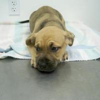 Adopt A Pet :: 35912887 - Cortez, CO