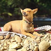 Adopt A Pet :: Tiny - Eugene, OR