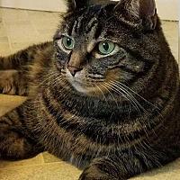 Adopt A Pet :: Ziva - Herndon, VA