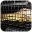 Photo 3 - Iguana for adoption in El Cajon, California - Iggy