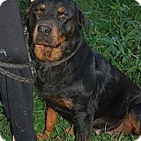 Adopt A Pet :: Jackie - Douglasville, GA
