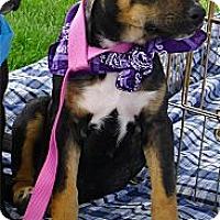 Adopt A Pet :: Sadie loves kids cats dogs - Sacramento, CA
