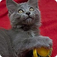 Adopt A Pet :: Roddy Doyle - Chicago, IL