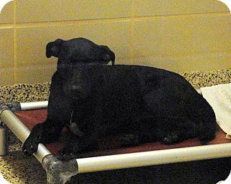 German Shepherd Dog Mix Dog for adoption in Aiken, South Carolina - Baby