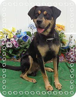 Rottweiler Mix Dog for adoption in Marietta, Georgia - LLOYD