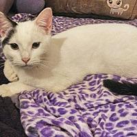 Adopt A Pet :: Domino - Atlanta, GA
