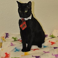 Adopt A Pet :: Lucky Boy - San Antonio, TX