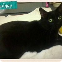 Adopt A Pet :: Squiggy - Baltimore, MD
