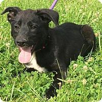 Adopt A Pet :: Aelin - Pleasant Plain, OH