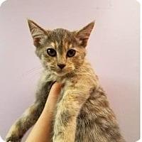 Adopt A Pet :: Renner - Mission, KS