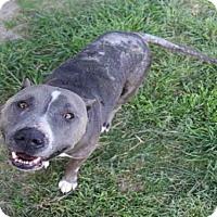 Adopt A Pet :: ROME - Houston, TX