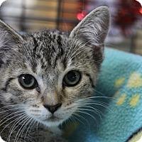 Adopt A Pet :: Liora - Sarasota, FL
